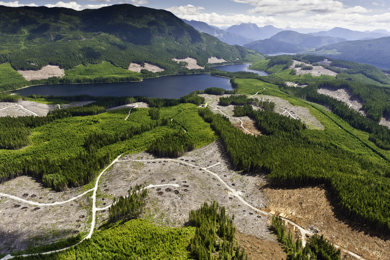 TimberWest logging threatens Great Bear Rainforest Solution